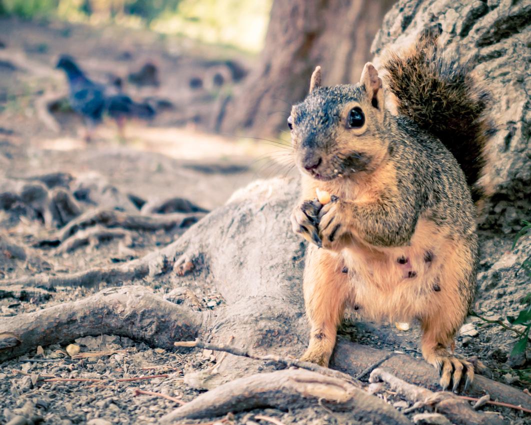 Brad Clawson Photography | Squirrel Moment! - Over the ...  Brad Clawson Ph...